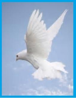 A SPIRITUAL DOVE NEW.jpg